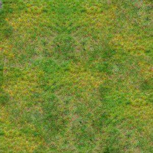 Lawn Rust Disease