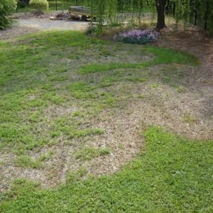 large patch grass