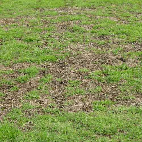 Lawn Diseases Commonly Found In Macon Ga Learn From The