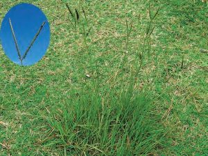 Bahia Grass Lawn Care Macon / Warner Robins