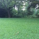 St. Augustine Lawn Care Macon / Warner Robins