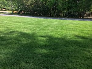 Dark green front lawn of a client that uses our lawn treatments. He uses our weed control and fertilization lawn treatment package that ensures his lawn is dark green and beautiful.