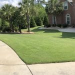 TifTuf Bermuda Lawn Care Macon / Warner Robins