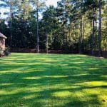 Zenith grass in Macon / Warner Robins