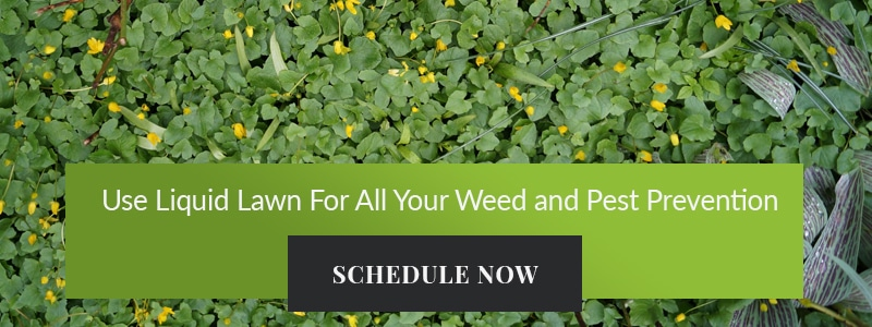 Weed and Pest Prevention Banner
